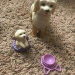 barbie dog groomer